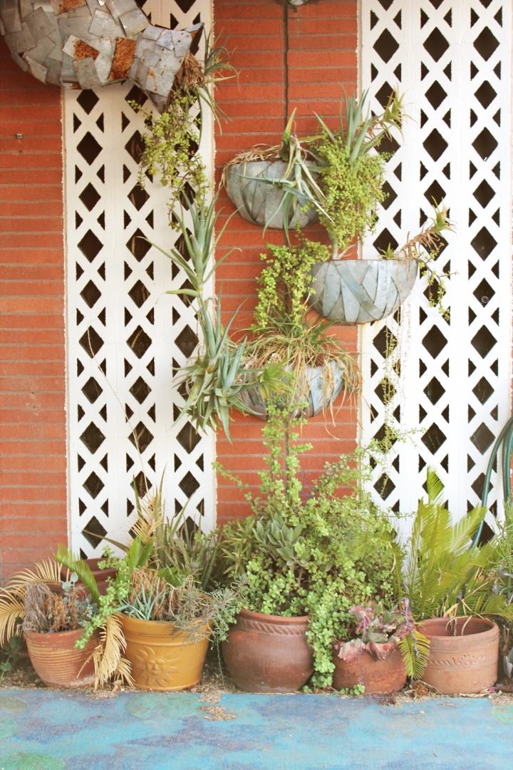 plant and brick